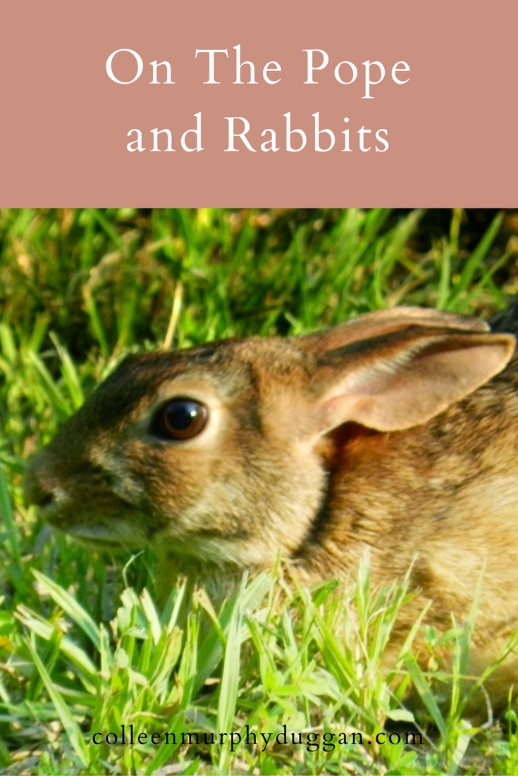 7 Quick Takes On The Pope, Rabbits, And Prudence by Colleen Duggan