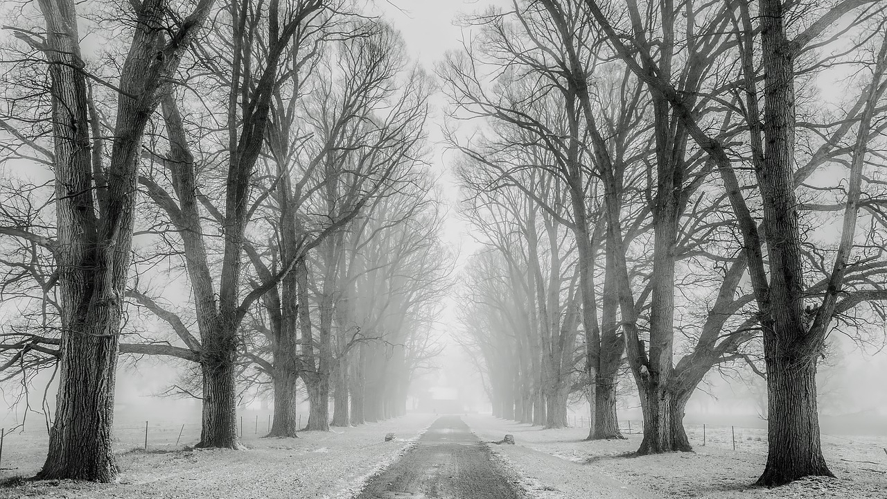 winter-1890653_1280.jpg