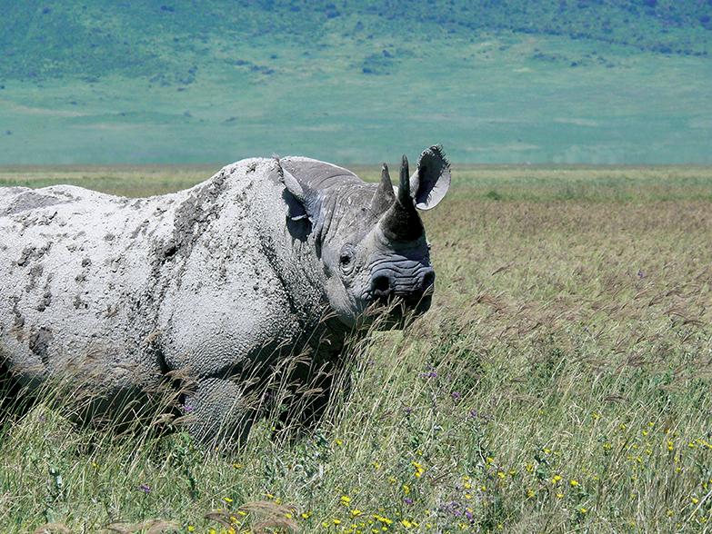 AK-Taylor-Tanzania-East-Africa-Safari-Rhino.jpg