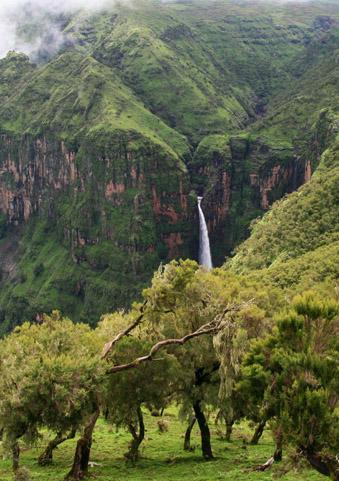 Forest Islands of Gondar