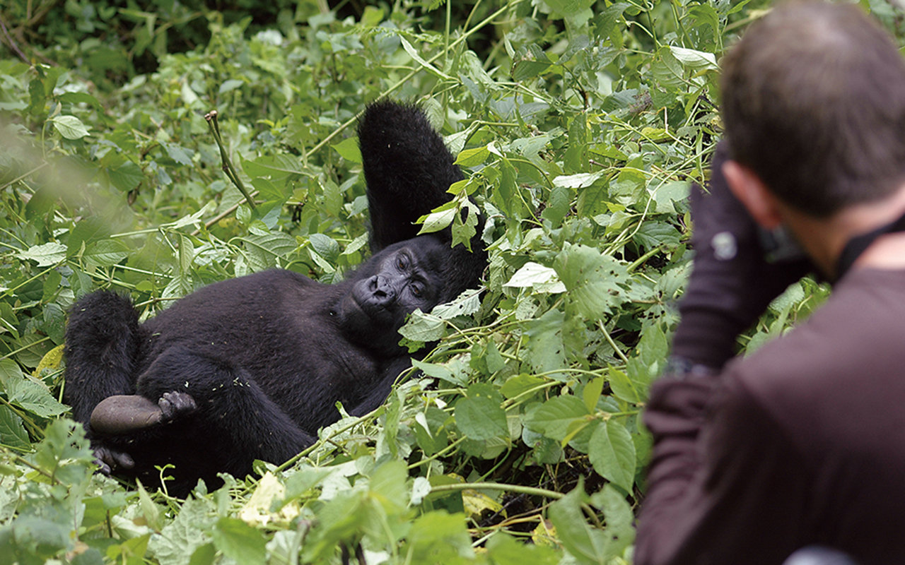 AK-Taylor-Uganda-East-Africa-Safari-Gorilla-Photo copy.JPG