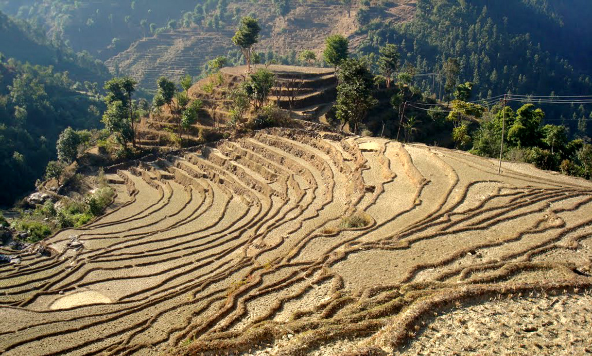 Agriculture_land_of_Nepal.jpg