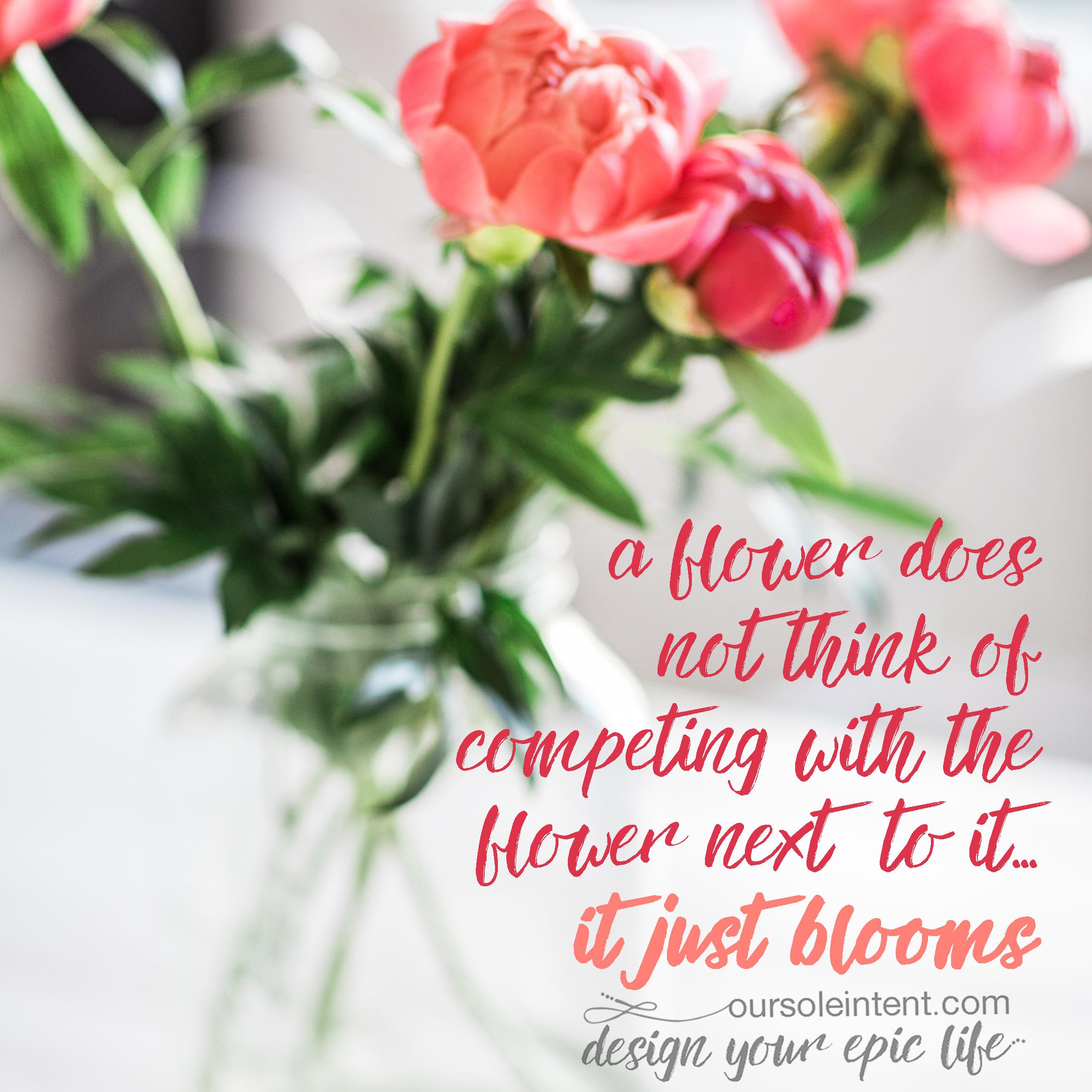 ..bloom baby bloom