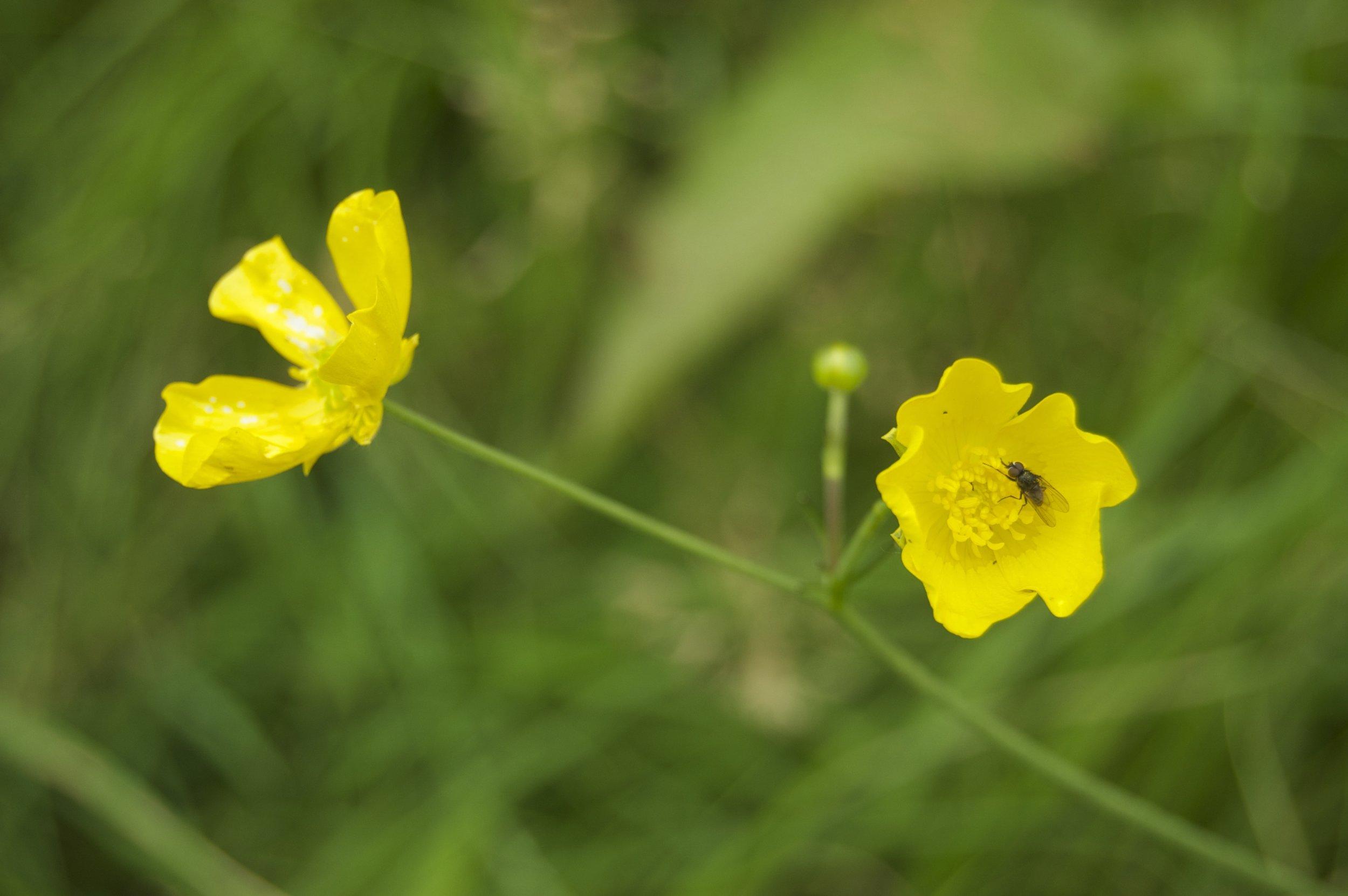 Wildflower 4.jpg