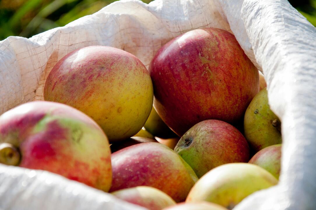 1 bag of apples.JPG