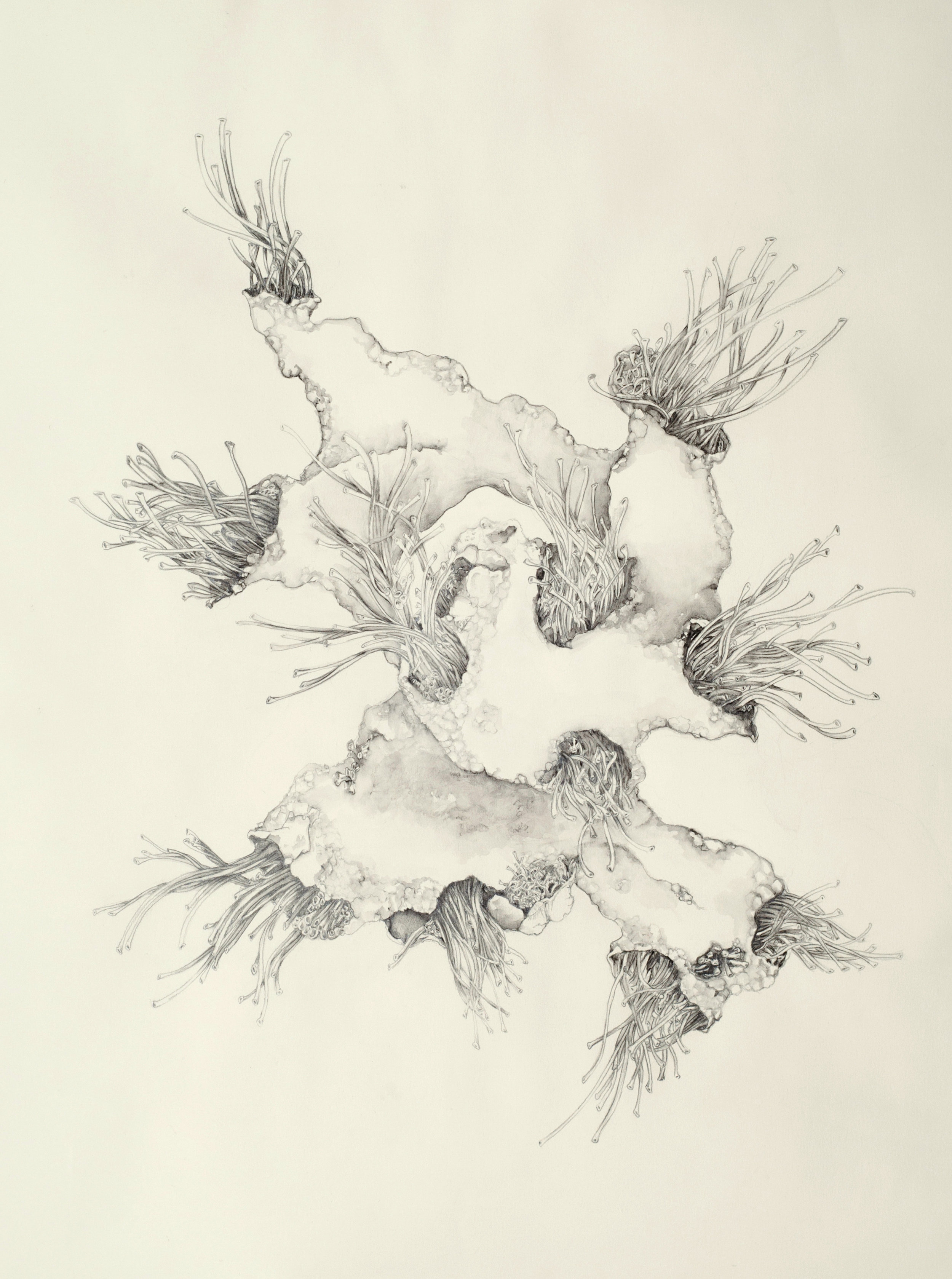 """430x   Moss    water-solu  ble graphite pencil on paper, 22"""" x 30""""    2014"""