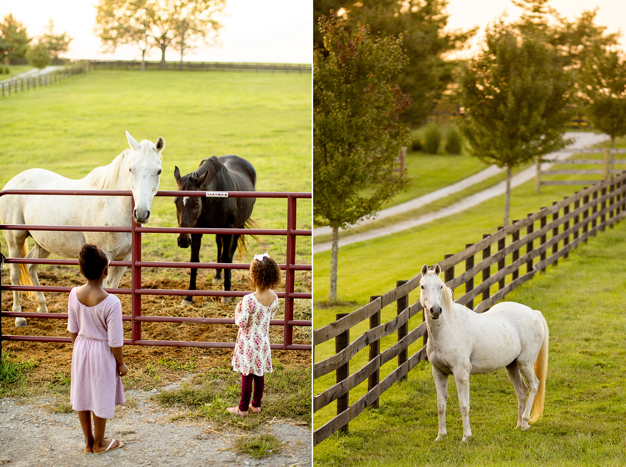 Seriously_Sabrina_Photography_Lexington_Kentucky_Family_Photographer_Seven_Acre_Farm_JimmieKristyn16.jpg