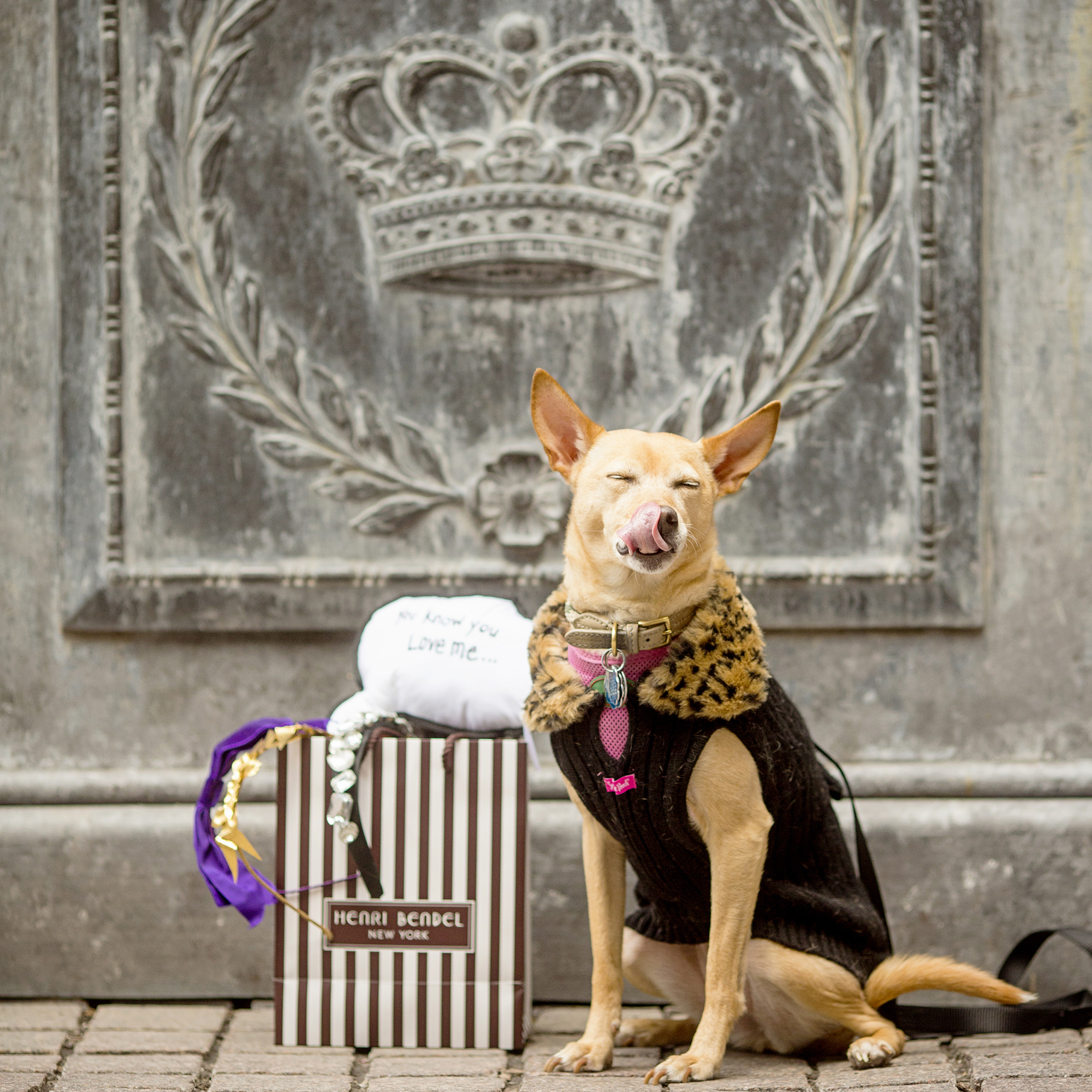 Seriously_Sabrina_Photography_New_York_City_NYC_Gossip_Girl_Dog_Blogger_Little_Holly_50.jpg