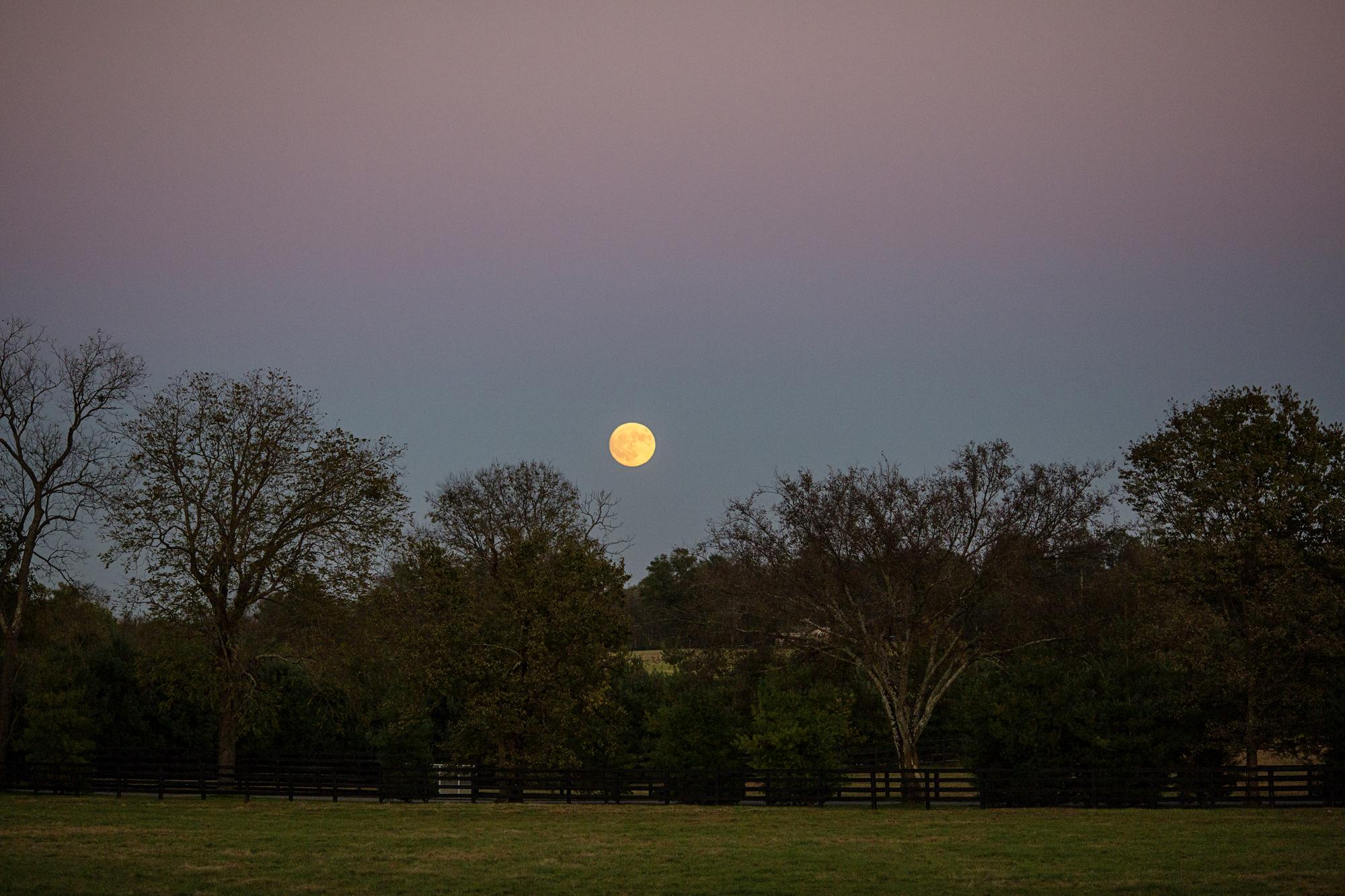 Seriously_Sabrina_Photography_Lexington_Kentucky_Burl_Winstar_Farm_Engagement_AliJerry_46.jpg