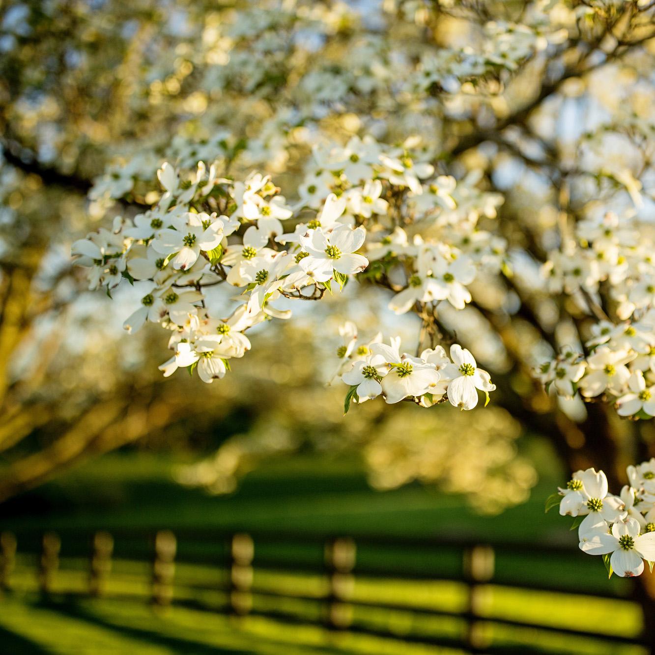 Seriously_Sabrina_Photography_Lexington_Kentucky_Sunset_Farm_Engagement_Cody_Sara_13.jpg