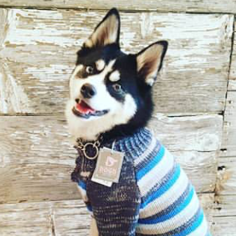 Elvis in a NYC Dogo Sweater