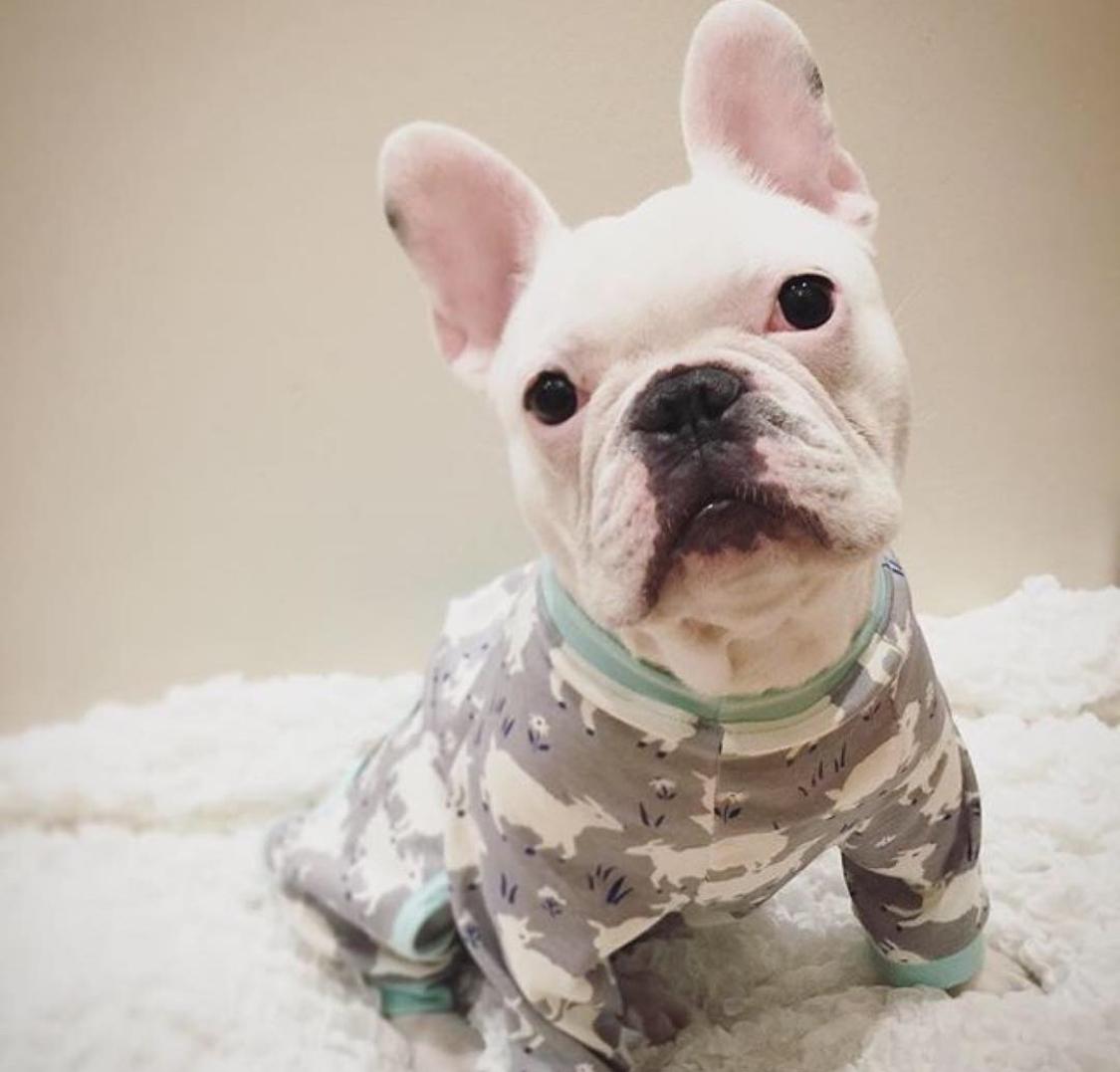 Casper in Eco-pup PJs