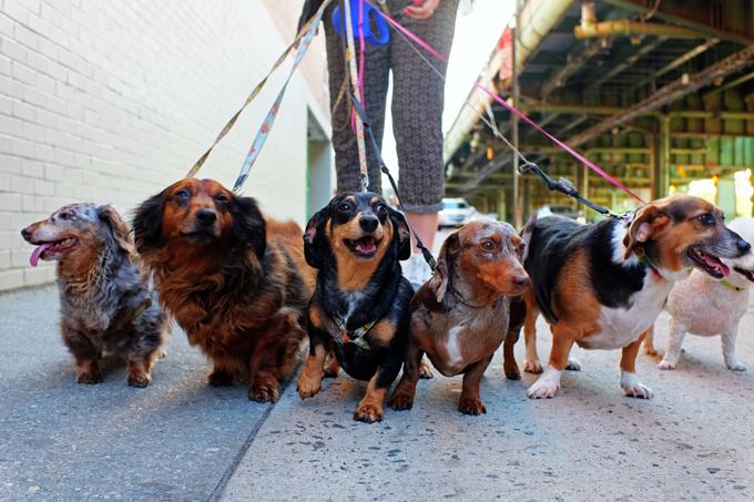 teach-dog-walk-leash.jpg