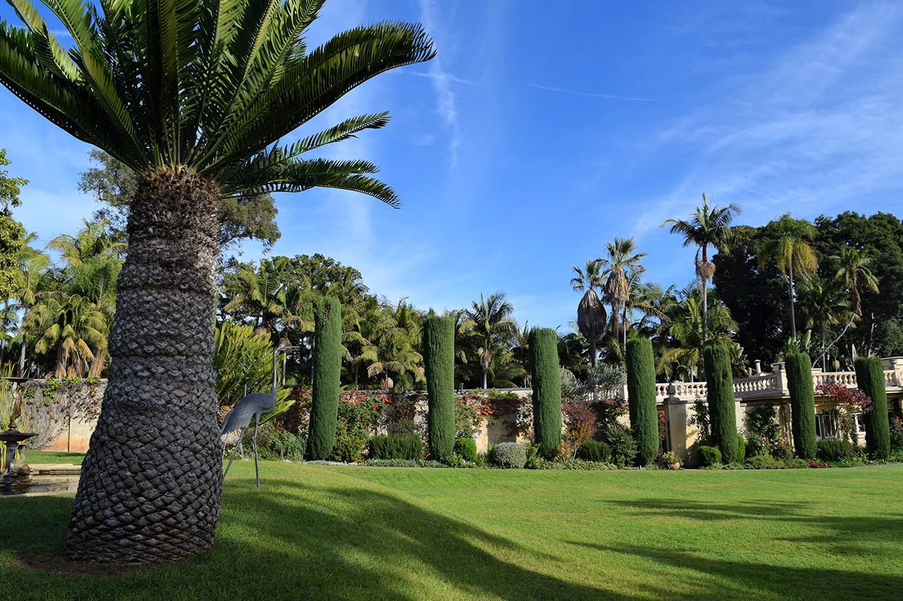 cycad cypress trees green lawn