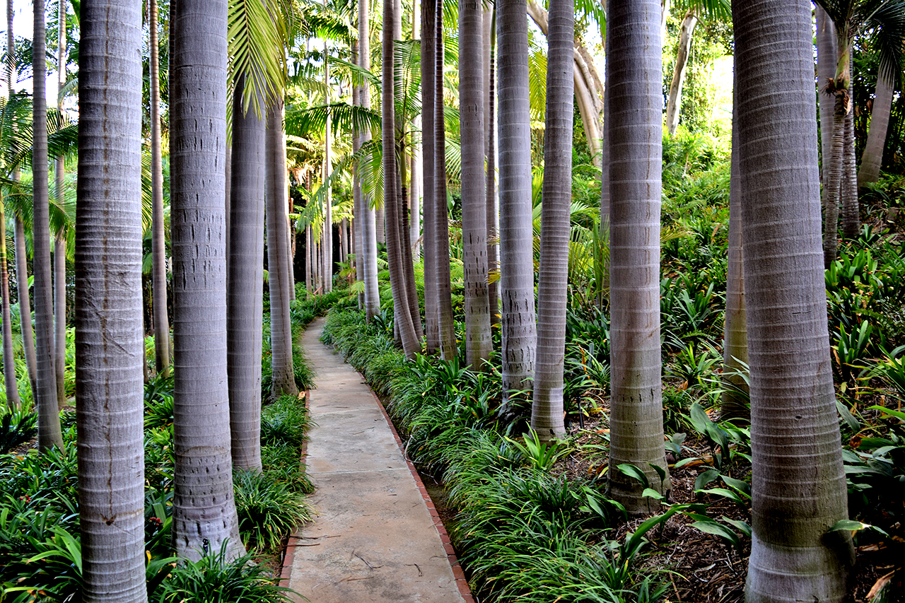 king palm forest