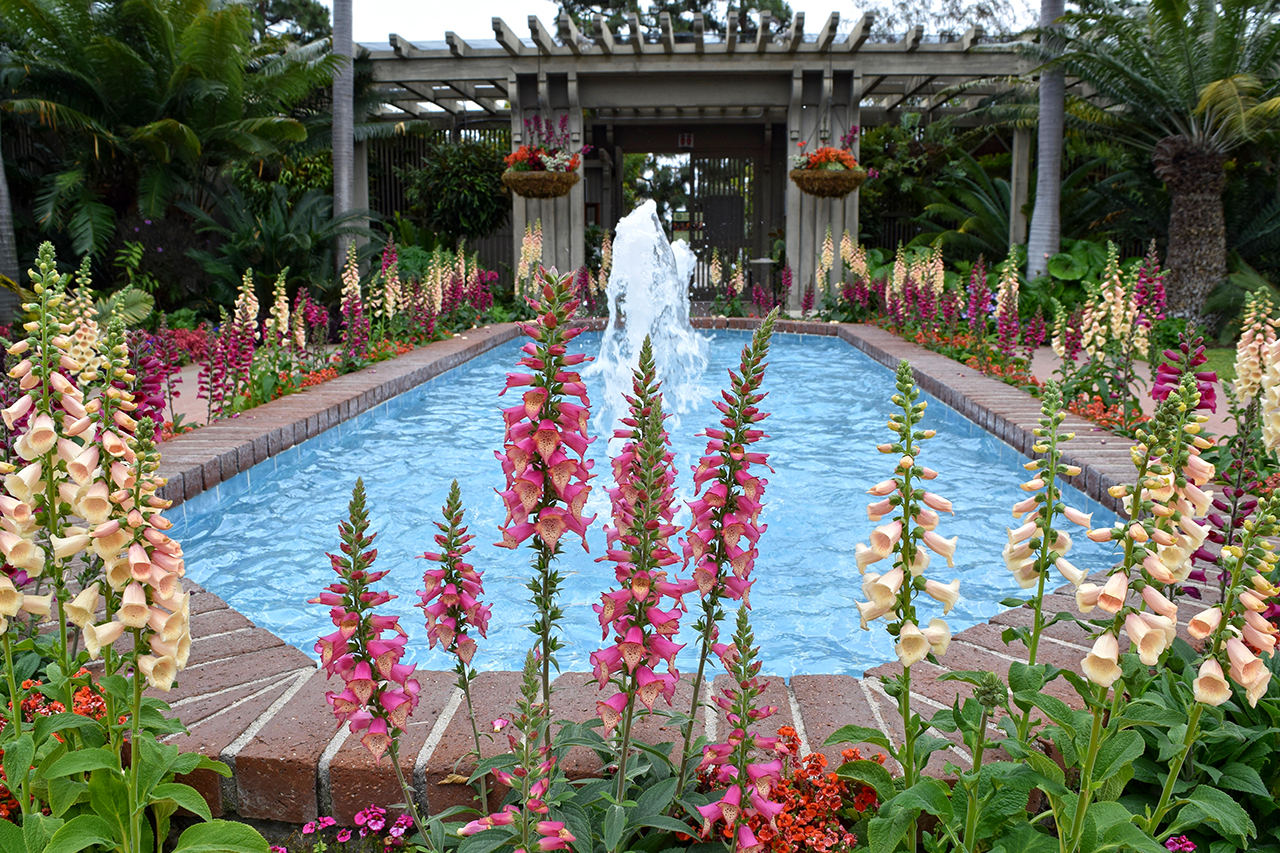 entrance fountain with foxglove flowers
