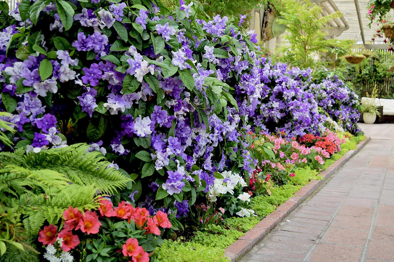 purple flowers in a border garden