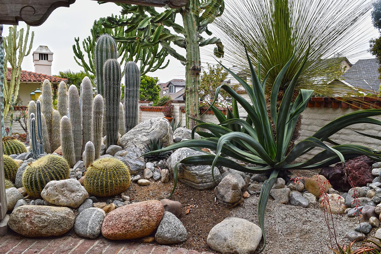 succulent and cactus garden