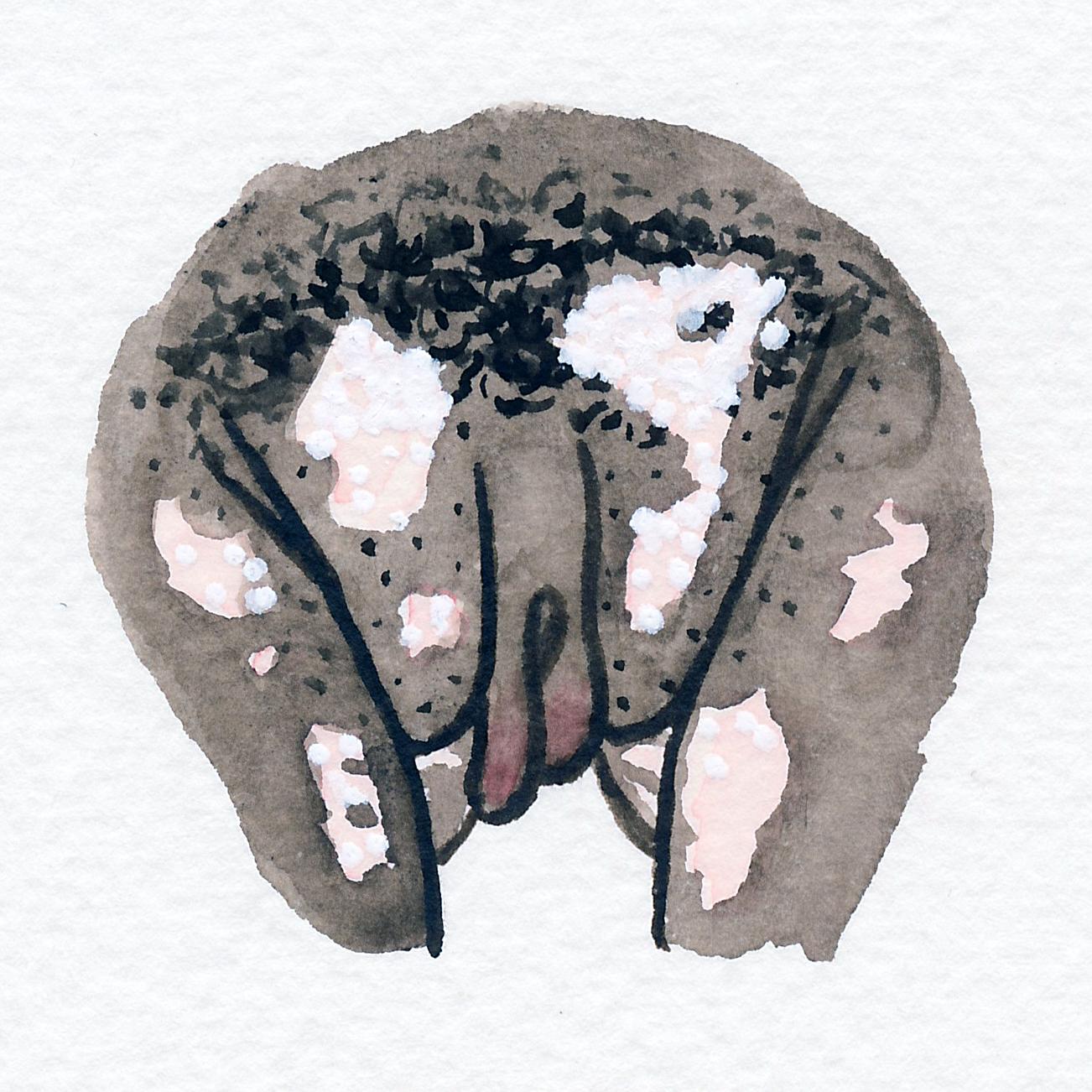 Vulva Gallery Brown79.jpg