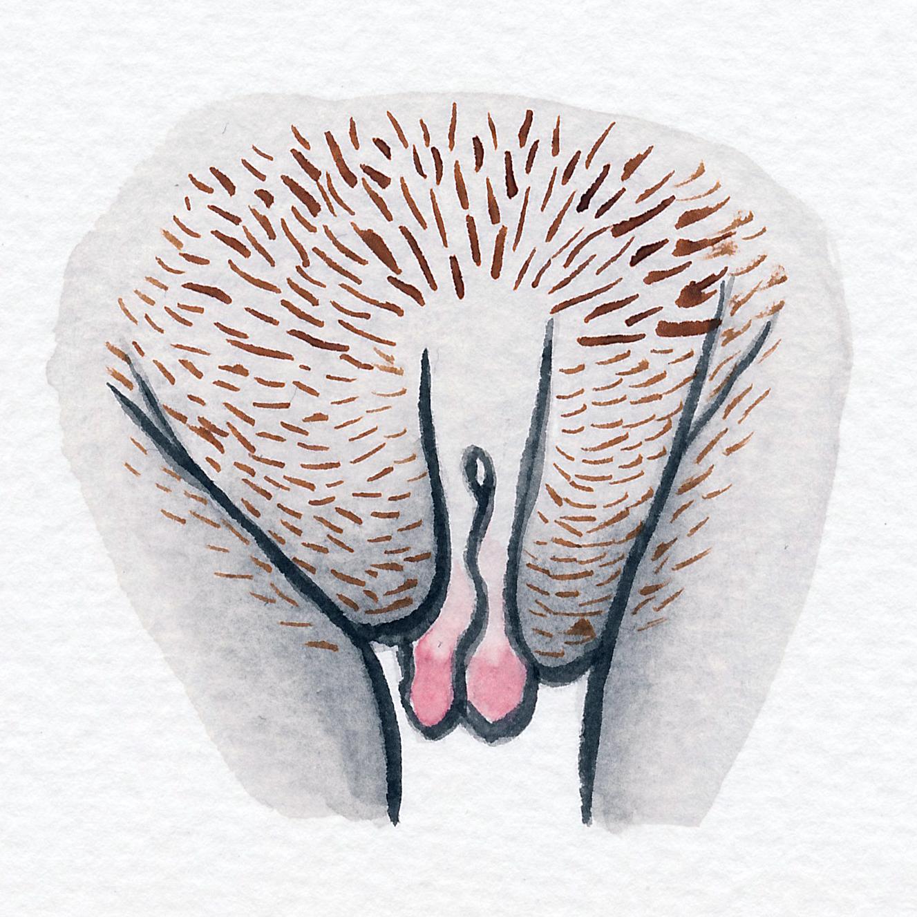 Vulva Gallery Brown81.jpg