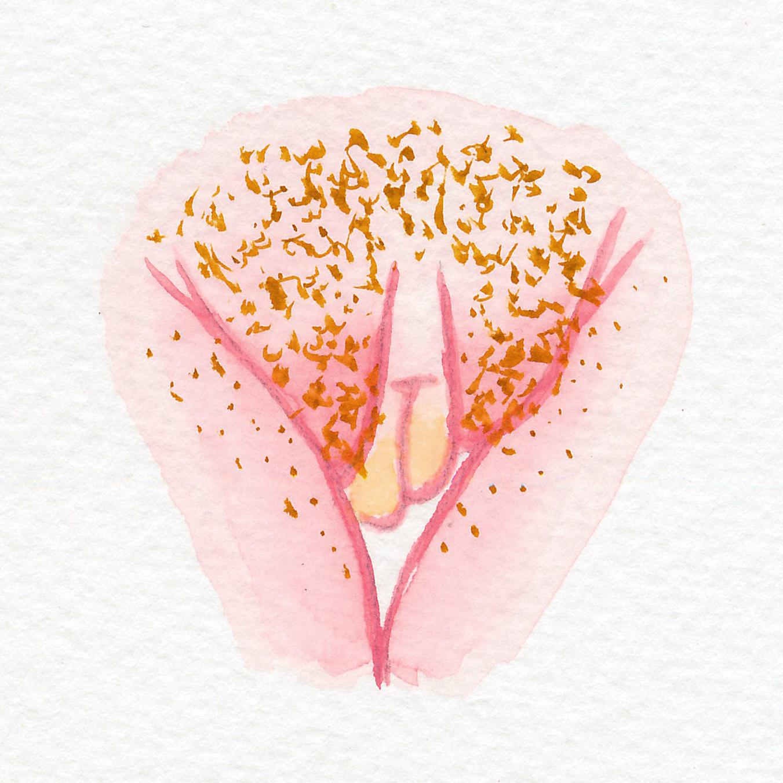 Vulva Gallery Pink50.jpg