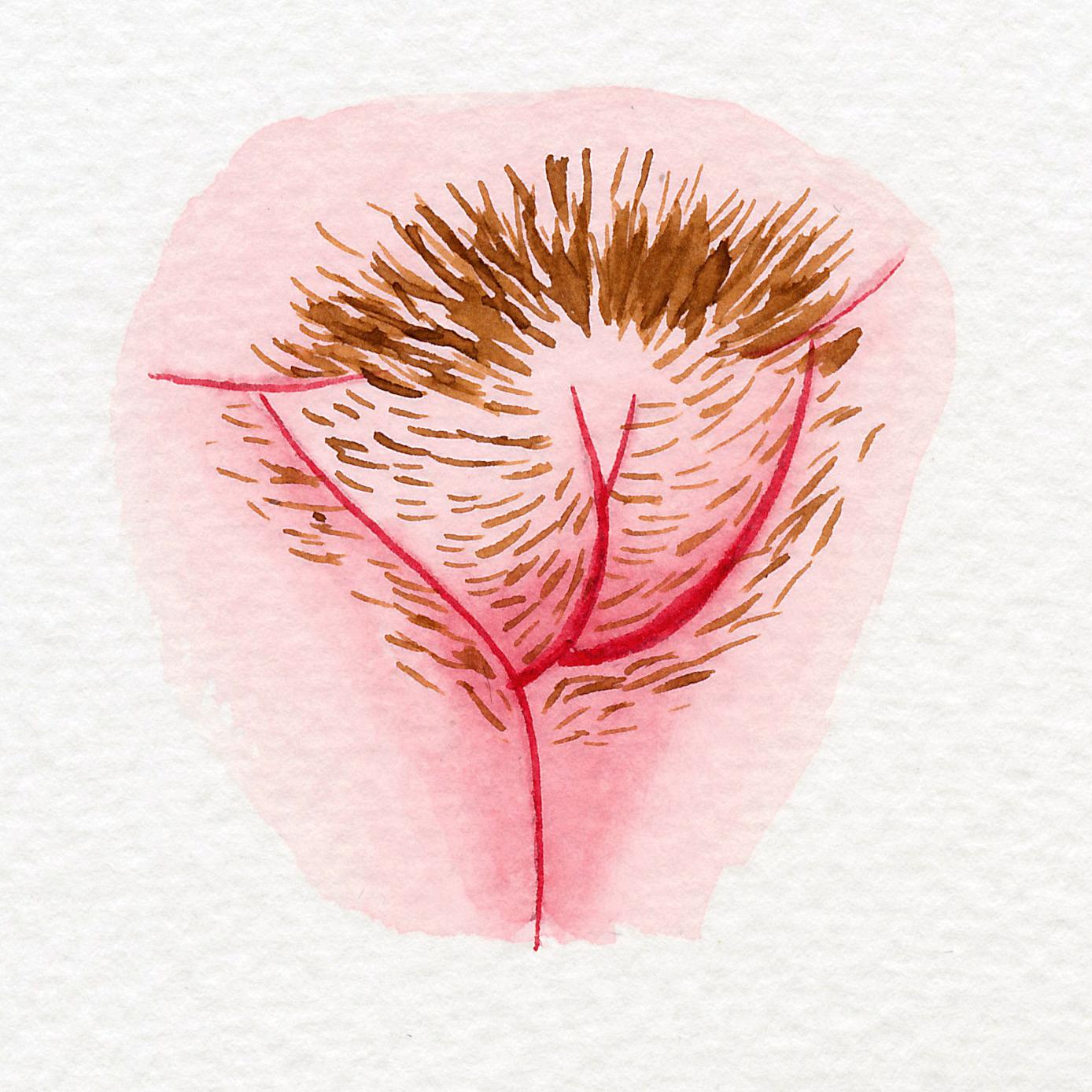Vulva Gallery Pink54.jpg