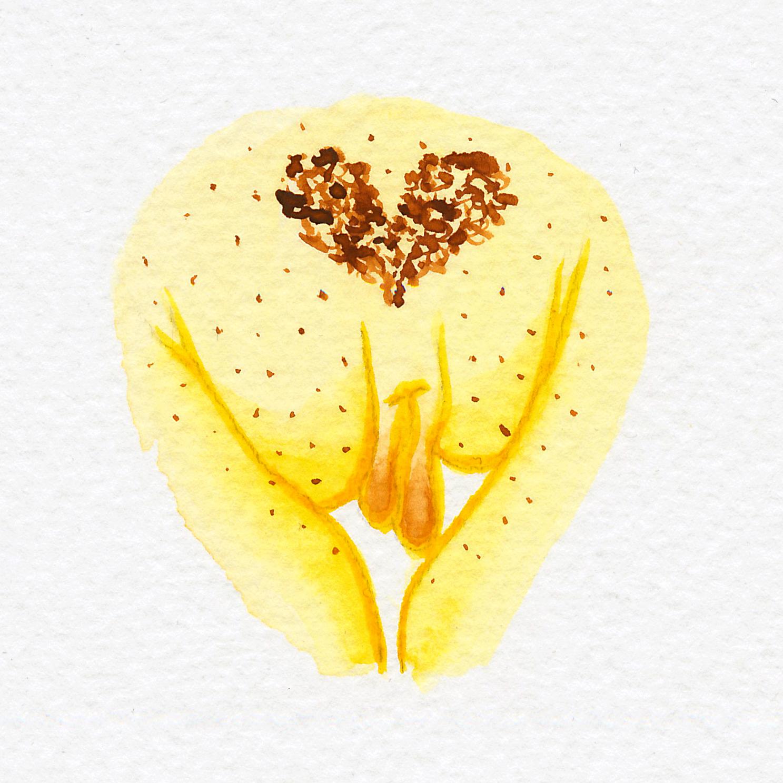 Vulva Gallery Yellow32.jpg