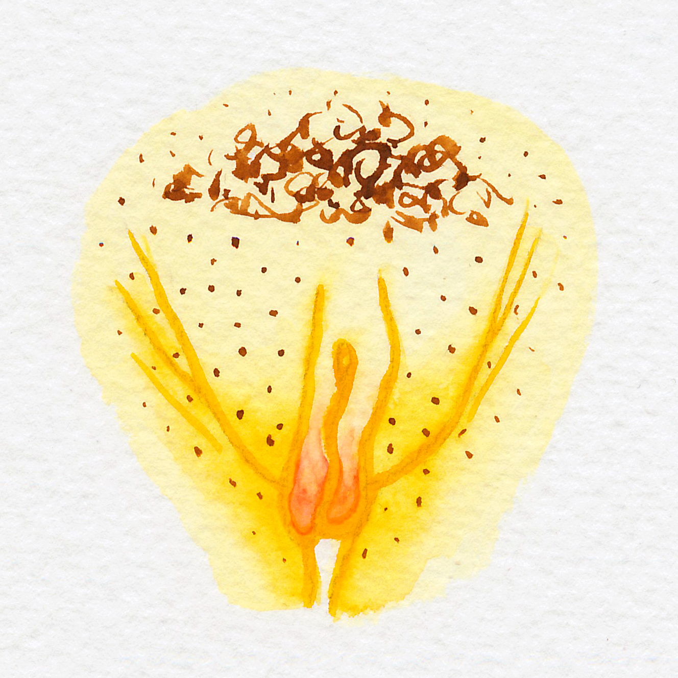 Vulva Gallery Yellow34.jpg