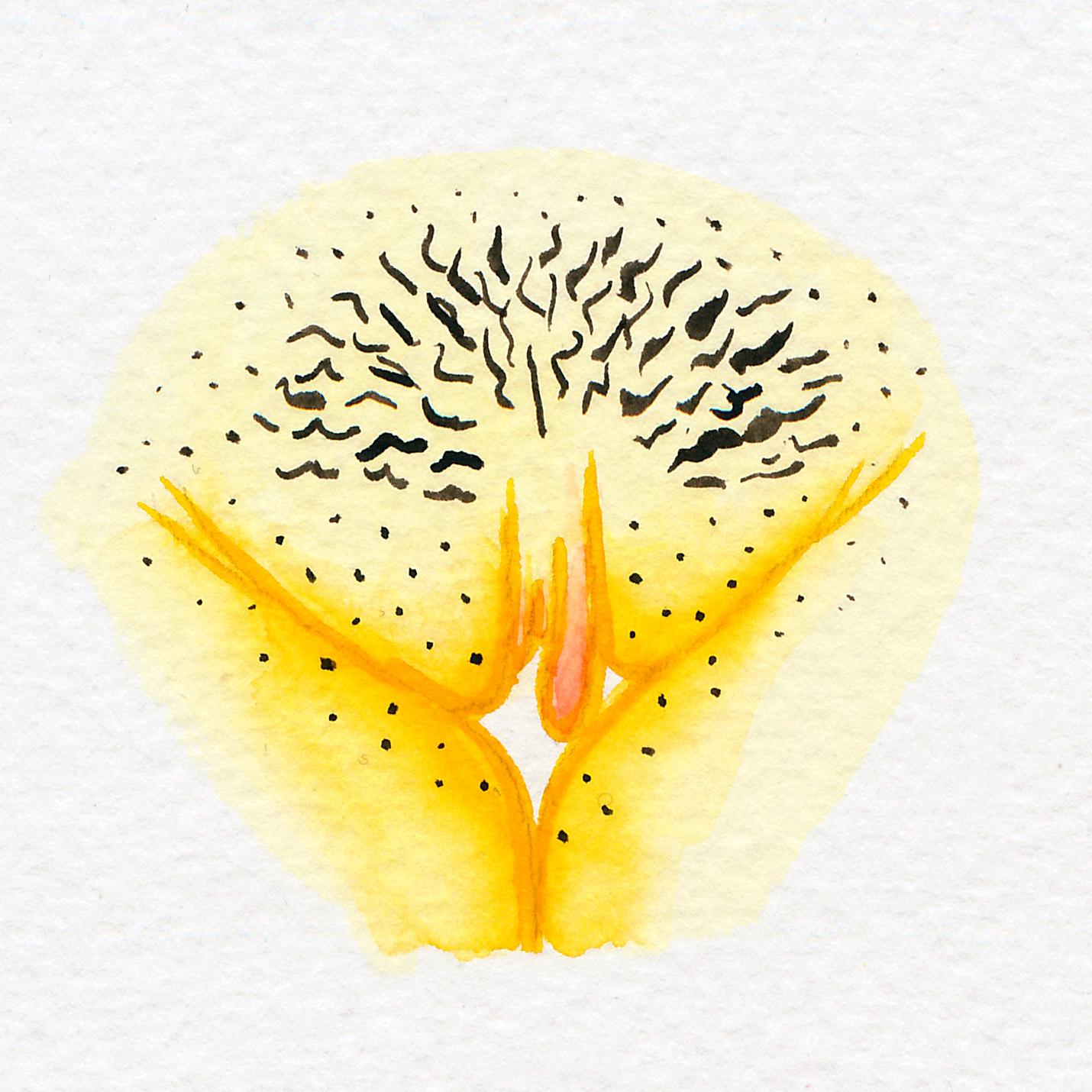 Vulva Gallery Yellow35.jpg