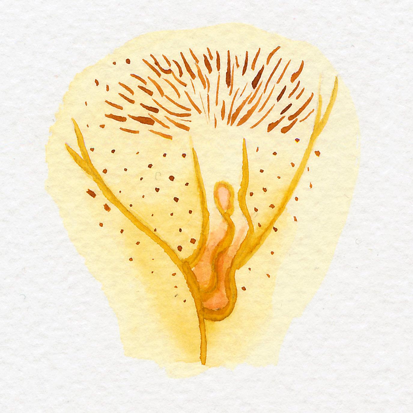 Vulva Gallery Yellow38.jpg