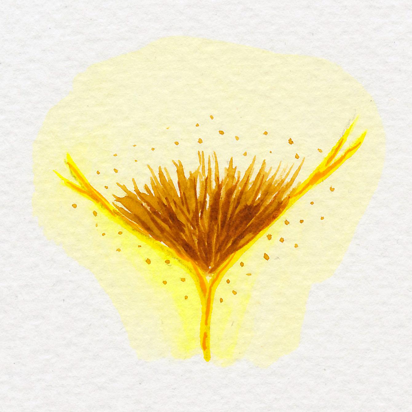 Vulva Gallery Yellow41.jpg