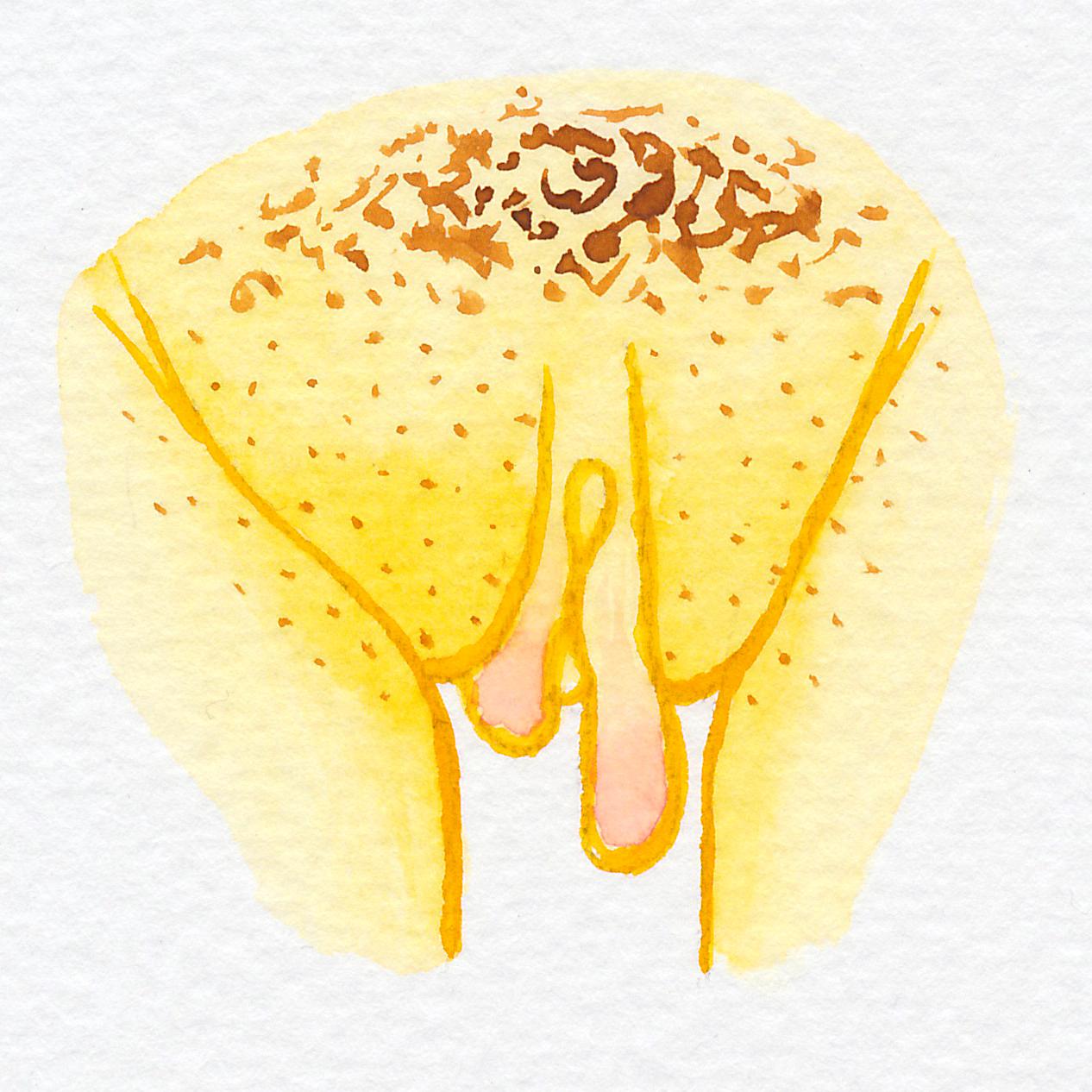 Vulva Gallery Yellow49.jpg