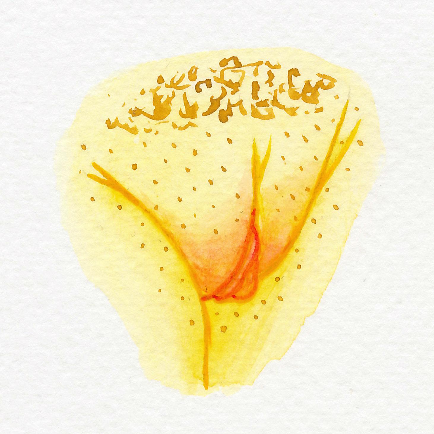 Vulva Gallery Yellow54.jpg