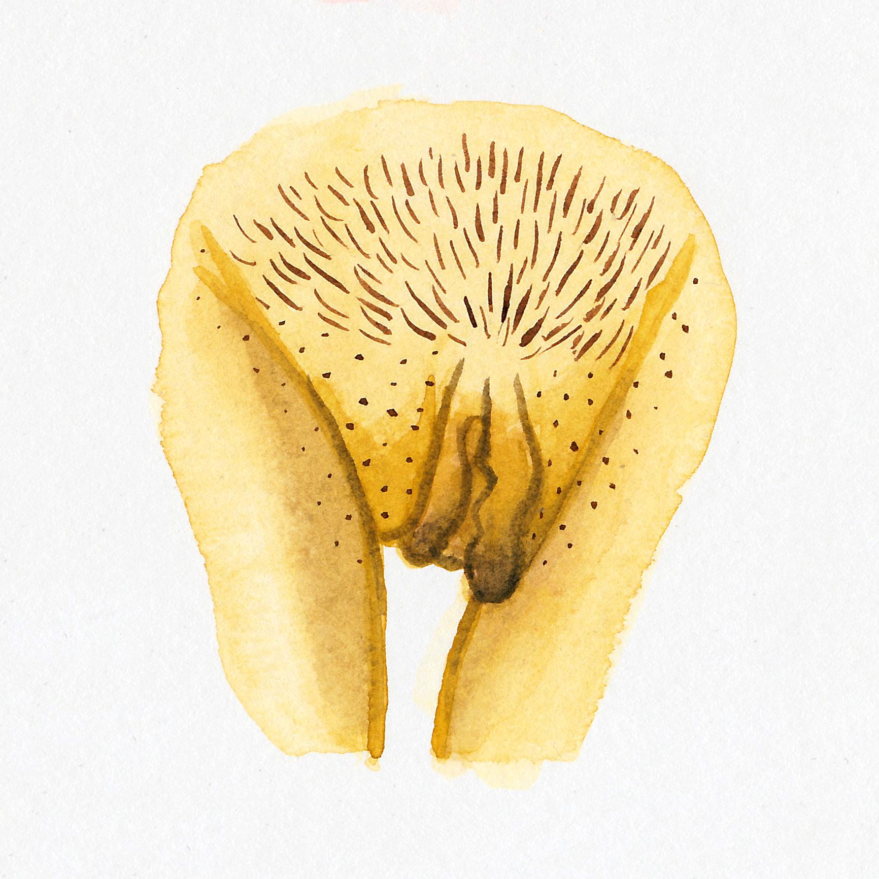 Vulva Gallery Yellow27.jpg