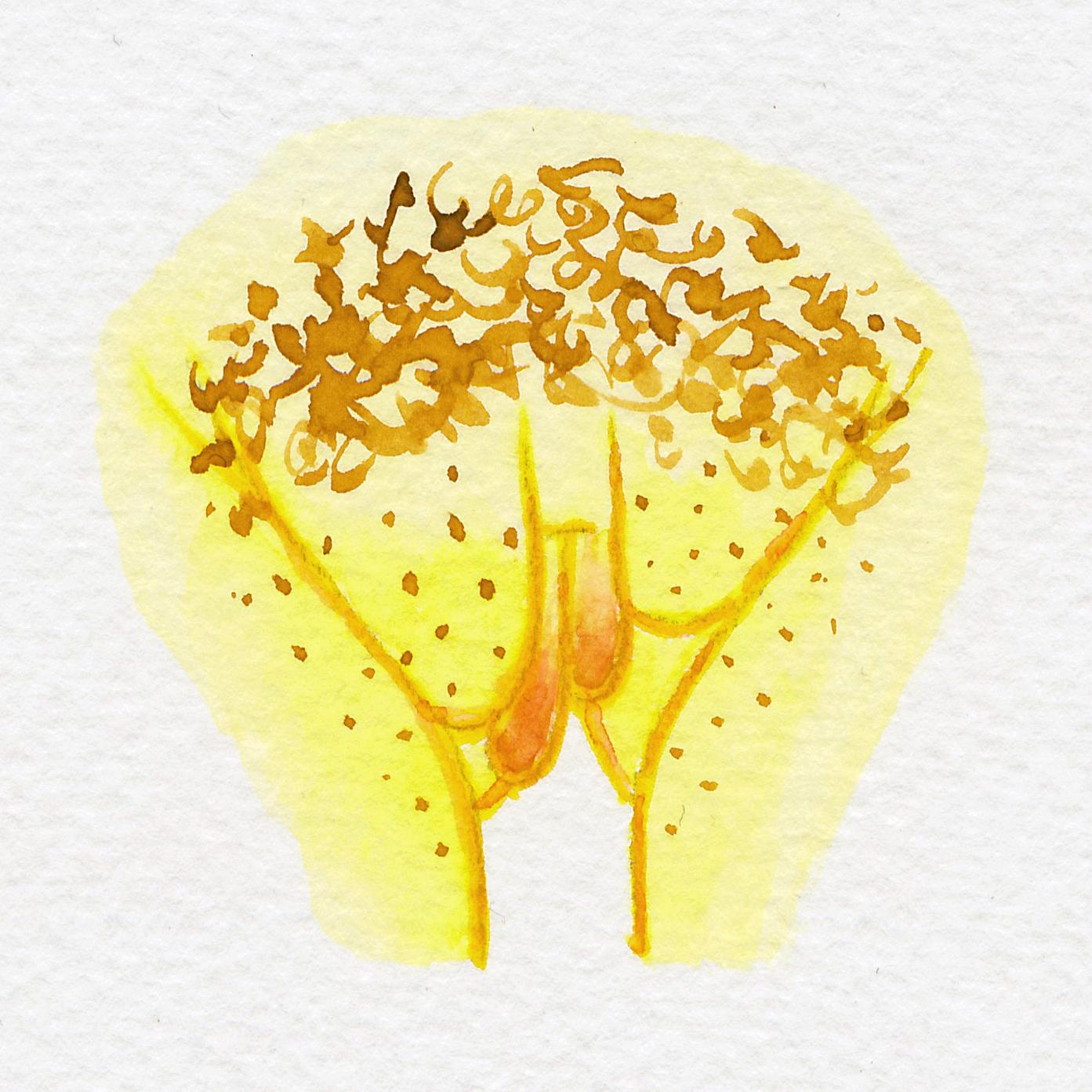 Vulva Gallery Yellow36.jpg