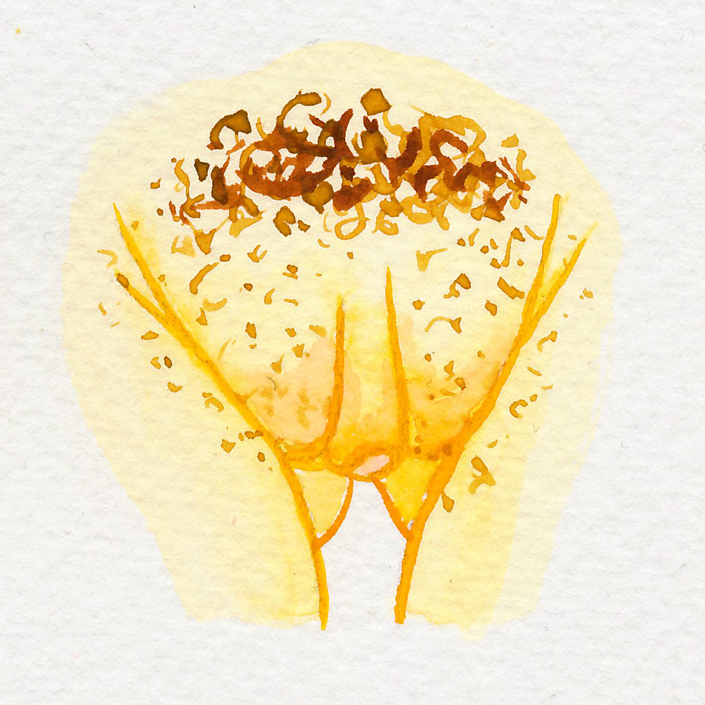 Vulva Gallery Yellow45.jpg