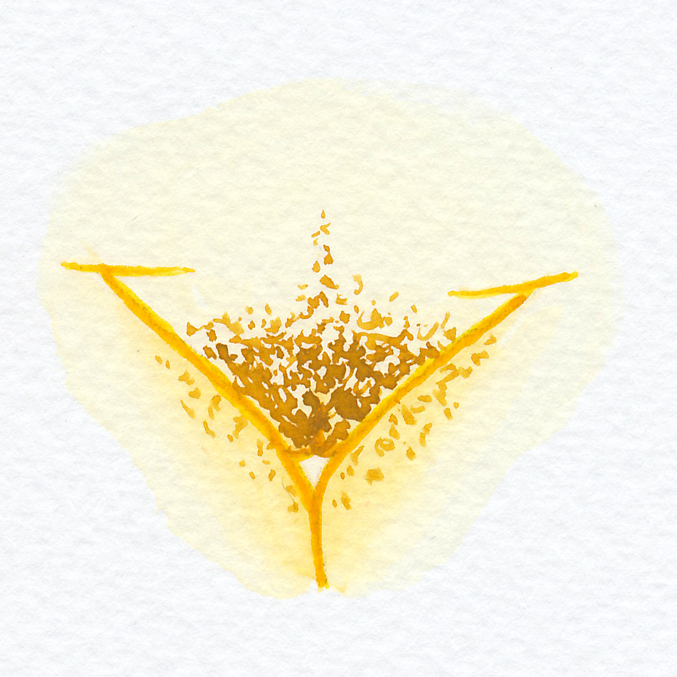 Vulva Gallery Yellow48.jpg