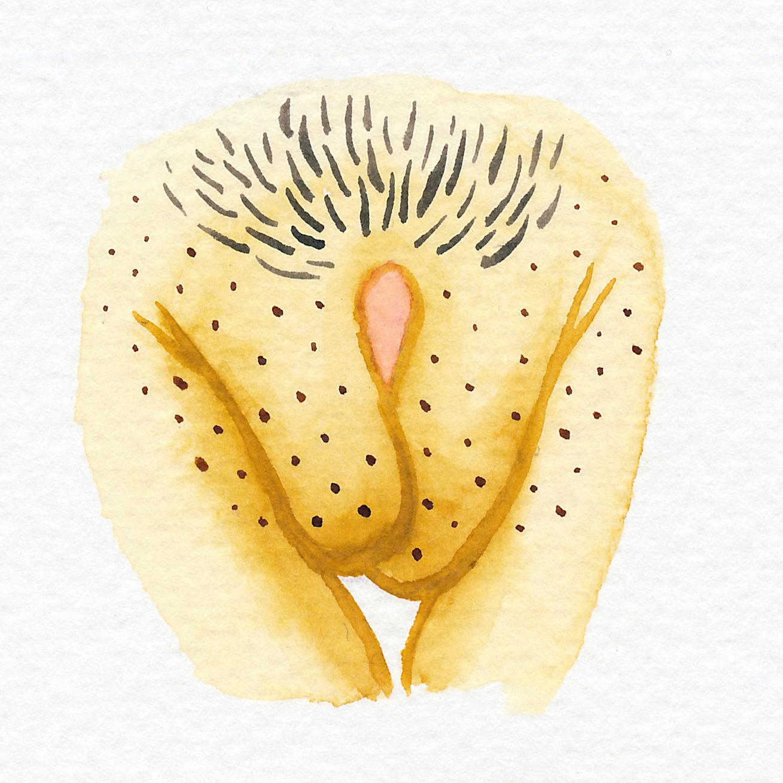 Vulva Gallery Yellow56.jpg
