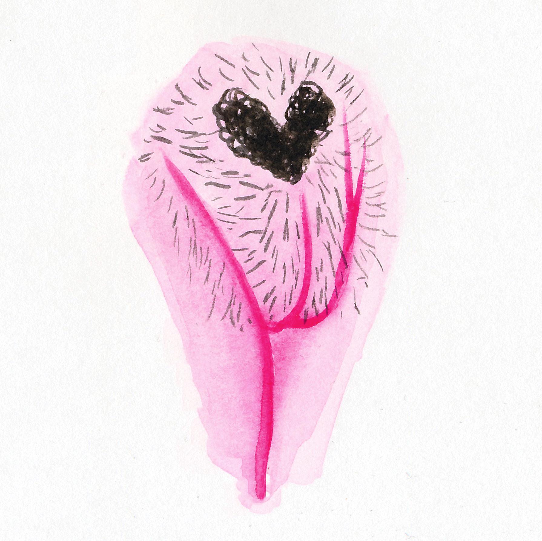 Vulva Gallery Pink36.jpg