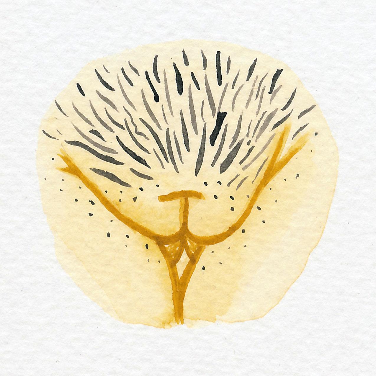 Vulva Gallery Yellow67.jpg