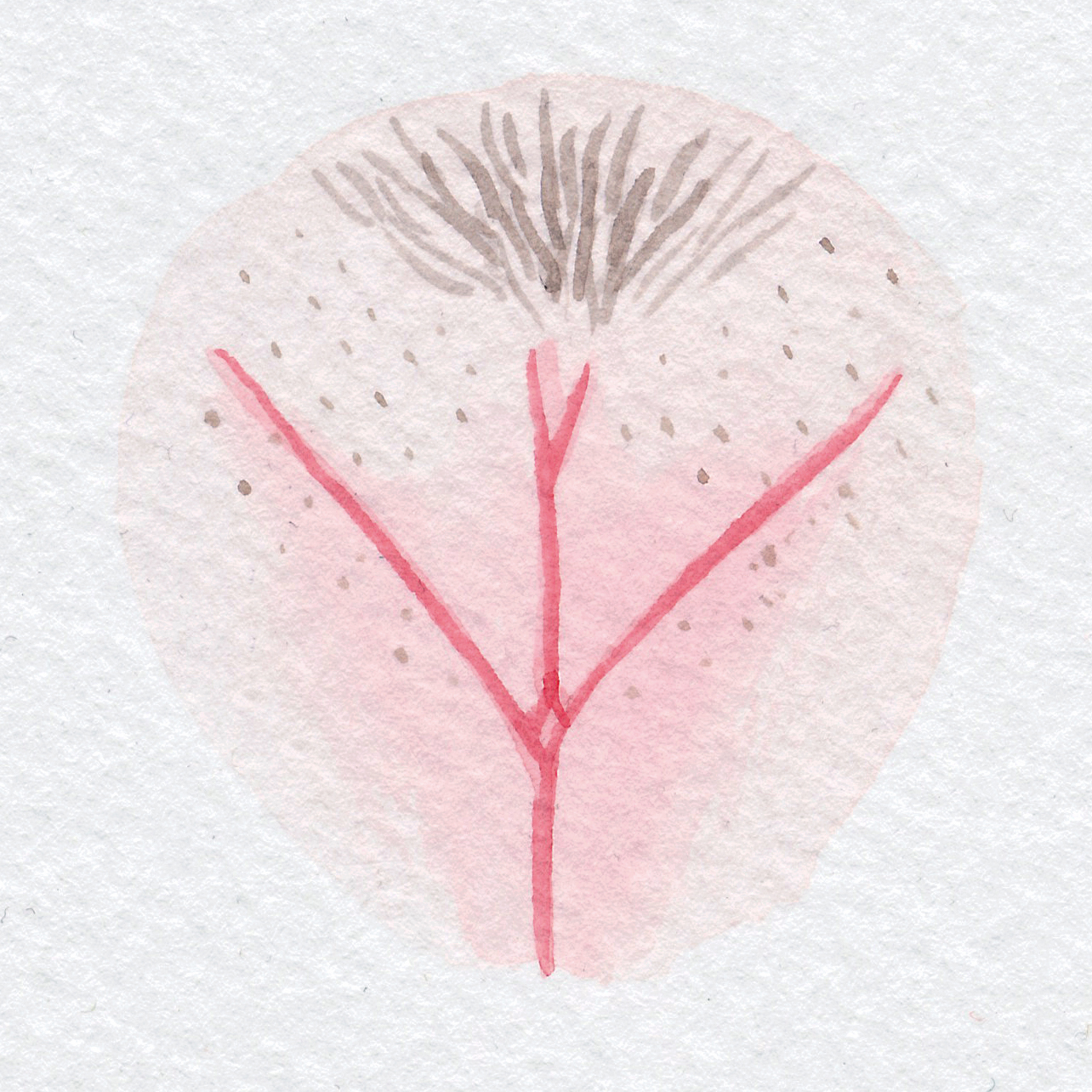 Vulva Gallery Pink82.jpg