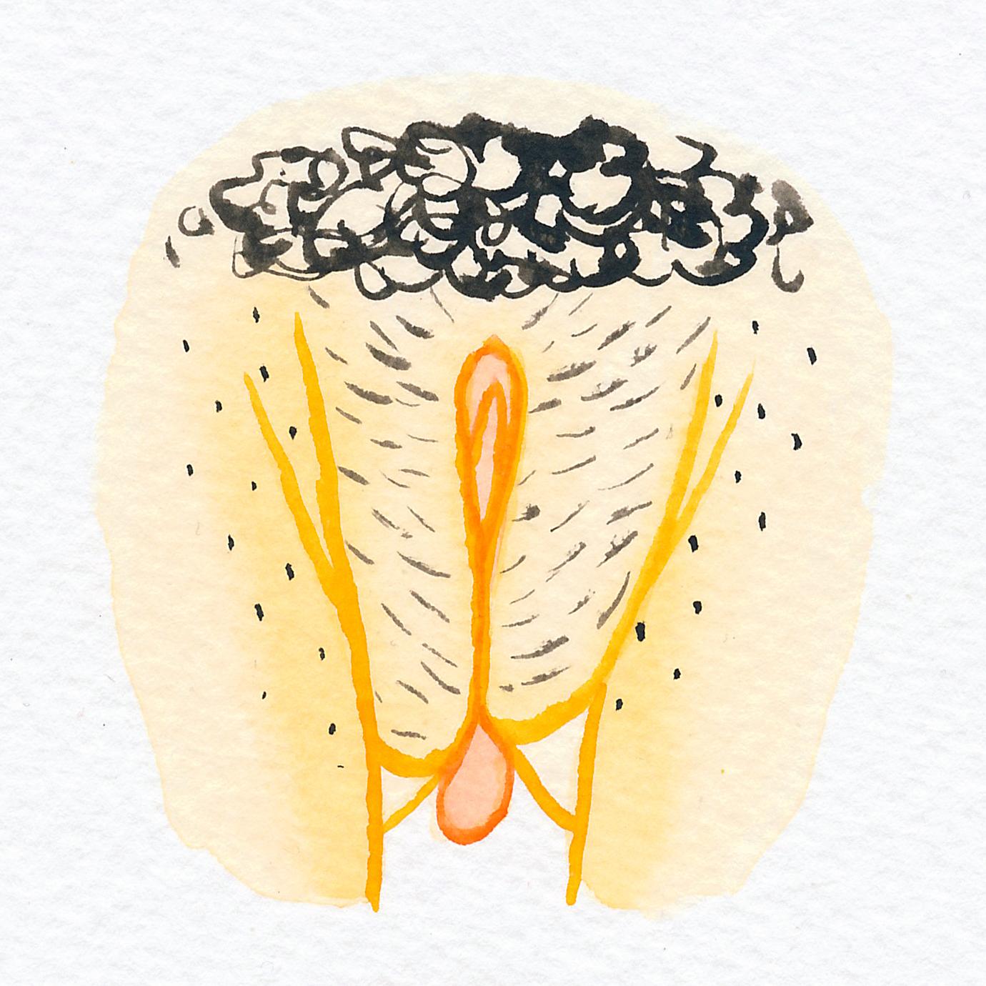 Vulva Gallery Yellow81.jpg