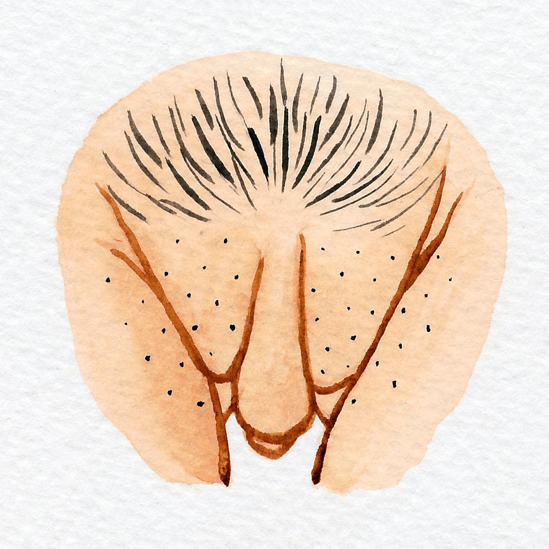 Vulva Gallery Brown142.jpg