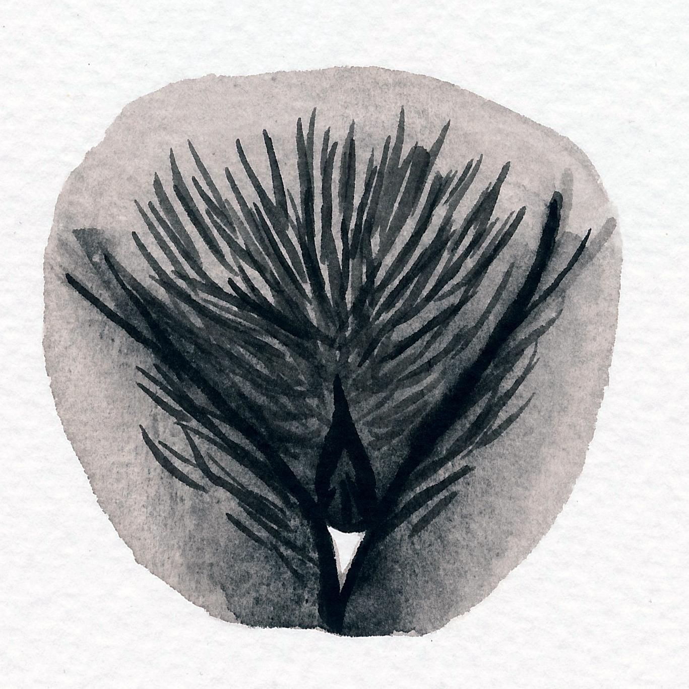 Vulva Gallery Brown178.jpg