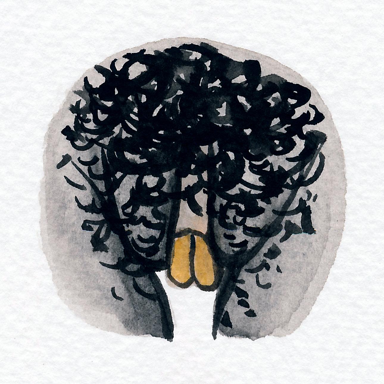Vulva Gallery Brown170.jpg