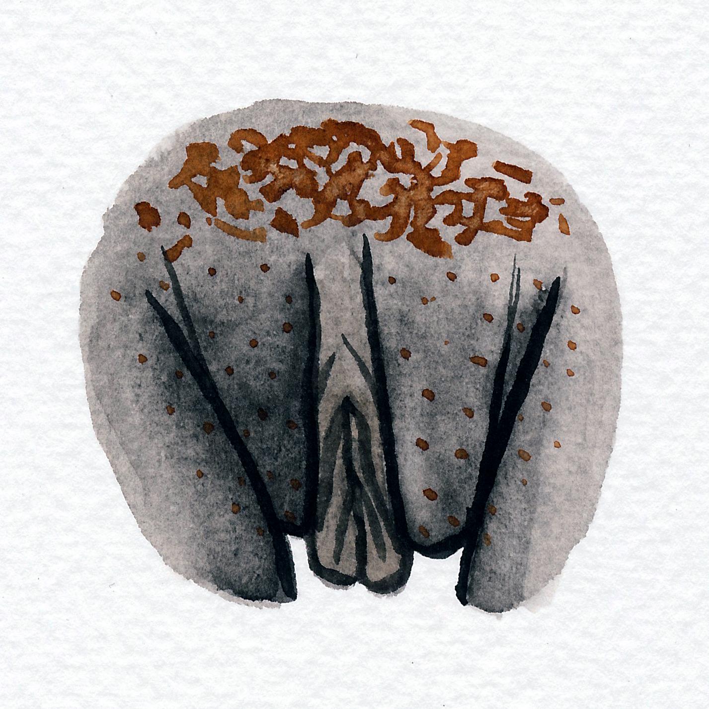 Vulva Gallery Brown169.jpg
