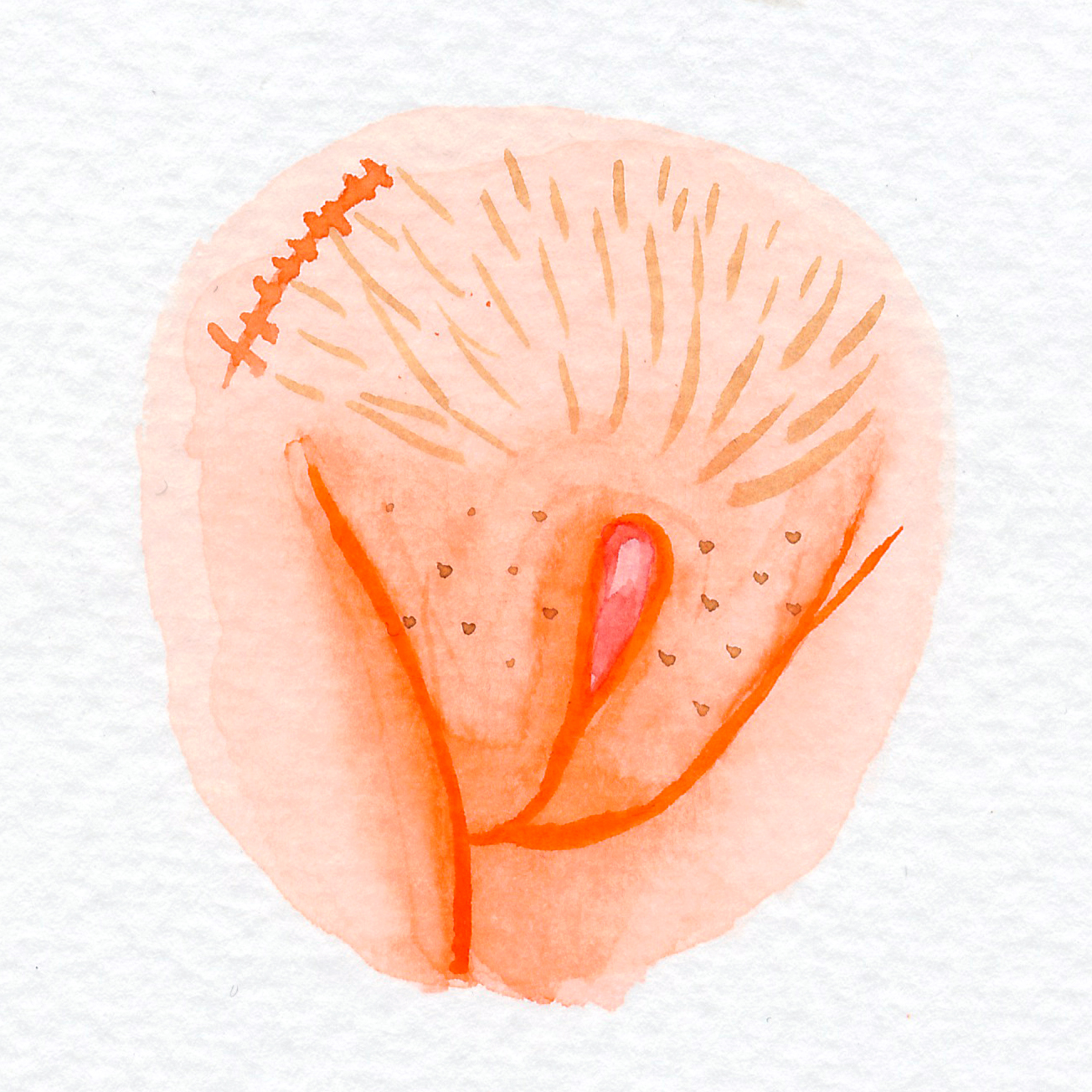 Vulva Gallery Orange8.jpg
