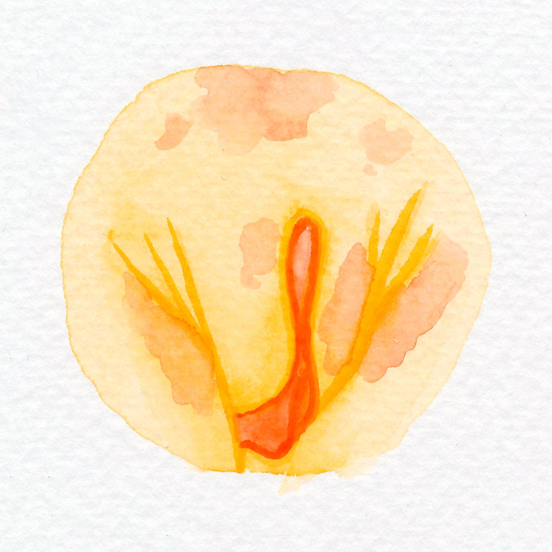 Vulva Gallery Yellow95.jpg