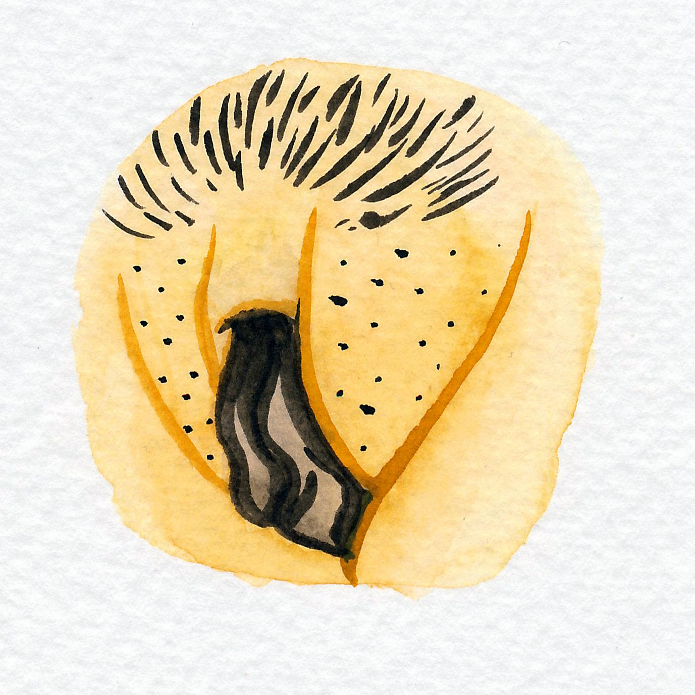 Vulva Gallery Yellow94.jpg