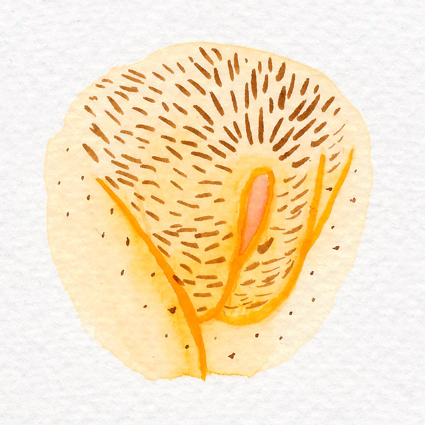 Vulva Gallery Yellow91.jpg